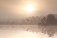 Dimmig höstsoluppgång över skogsjön Arkivbild