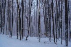 Dimmig julmorgon i skogen royaltyfri bild