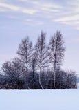 dimmig landskapvinter Arkivfoto