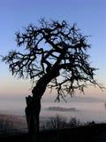 dimmig liggande fotografering för bildbyråer