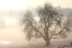 dimmig liggandevinter för kall dag Fotografering för Bildbyråer