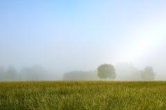 Dimmig morgonäng med ett träd Arkivfoto