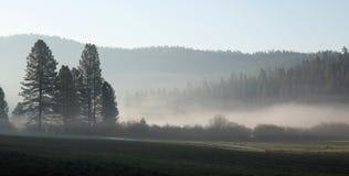 Dimmig morgon Arkivfoto