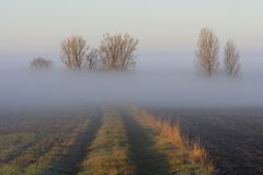 dimmig morgon Arkivbilder