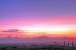 dimmig morgon Arkivfoton