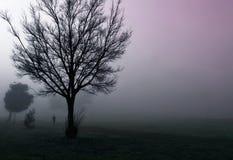 dimmig morgon Royaltyfri Fotografi