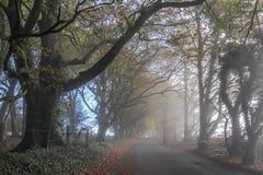 Dimmig morgon för Aggs kulle royaltyfri fotografi
