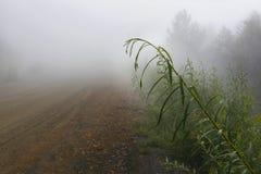 dimmig morgon för bygd för november för morgon för dimma för landsslutfall skjuten säsong väg Arkivbild