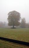 dimmig morgon för fall Arkivbilder