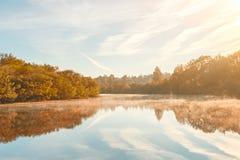 Dimmig morgon för höst Höstgryningplats Alden träd på dimmig flodstrand dimmig ström för höst fotografering för bildbyråer