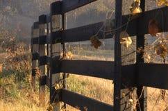 dimmig morgon för staket royaltyfria foton