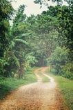dimmig morgon Grusväg i djungeln Torr säsong fotografering för bildbyråer