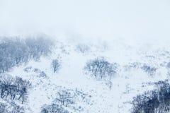 Dimmig morgon i de korkade bergen för snö, kala träd i vinter arkivfoton