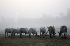 Dimmig morgon i den Bengal bygden Kumrokhali Arkivbild