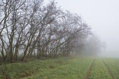 Dimmig morgon i fältet med träd i nedgång Royaltyfri Bild