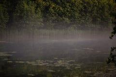 Dimmig morgon i fältet i sommar arkivbilder