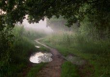 Dimmig morgon i skogen royaltyfri bild