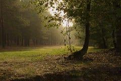 Dimmig morgon i skogen (den Pisochne ozeroen, Ukraina) Arkivfoto