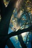Dimmig morgon med solstrålar Royaltyfria Bilder