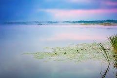 Dimmig morgon på en sjö Royaltyfri Bild