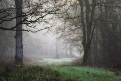 Dimmig morgonbana för skogsmark med birdbox i vinter royaltyfri foto