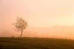 dimmig morgonsoluppgång Royaltyfri Fotografi