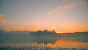 Dimmig morgonsoluppgång på träsk arkivfilmer