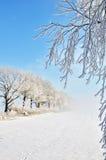 Dimmig och frostig morgon Royaltyfri Fotografi