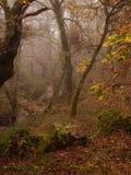 Dimmig plats för morgonhöstnedgång på skog Arkivbilder