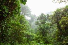 Dimmig rainforest i reserv för Monteverde molnskog royaltyfri bild
