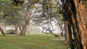 Dimmig ren natur för morgon arkivbild