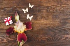 Dimmig rosa iris med garneringar Arkivfoto