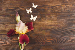 Dimmig rosa iris med garneringar Royaltyfri Foto