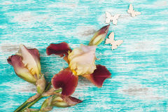 Dimmig rosa iris med garneringar Royaltyfria Foton