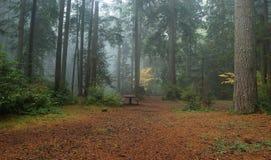 dimmig skog Fotografering för Bildbyråer