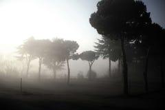 dimmig skog Arkivfoto