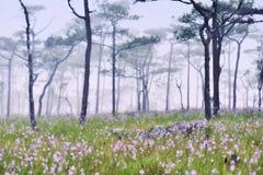 dimmig skog Arkivfoton