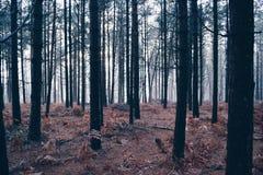 dimmig skog royaltyfri foto