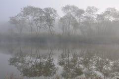 dimmig skog Arkivbild