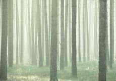 dimmig skog Royaltyfri Fotografi