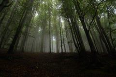Dimmig skog efter regnet arkivfoto