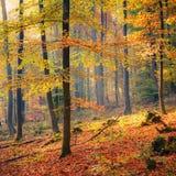 dimmig skog för höst Fotografering för Bildbyråer