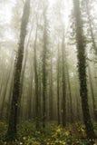 dimmig skog för höst Royaltyfri Foto