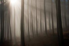 Dimmig skog i höstmorgonen Arkivfoto