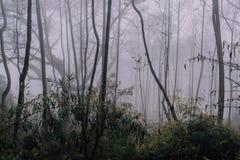 Dimmig skog i Nepal berg efter regnet Fotografering för Bildbyråer