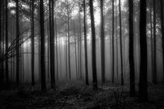 Dimmig skog i svartvitt Royaltyfri Fotografi