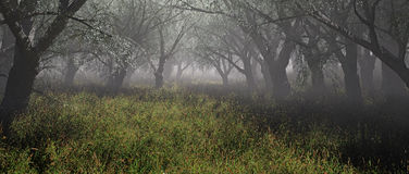 Dimmig skog med gräs Royaltyfria Foton