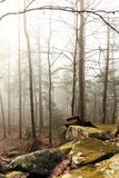 Dimmig skog med träd Royaltyfri Bild