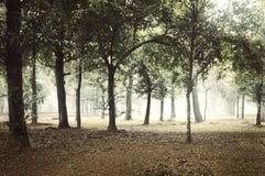 Dimmig skog på dagen royaltyfri bild