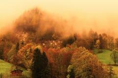 Dimmig skog på schweiziska fjällängar Royaltyfri Bild